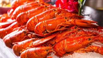 American Dialect Society names the lobster emoji an Emoji of the Year due to trans community's usage.