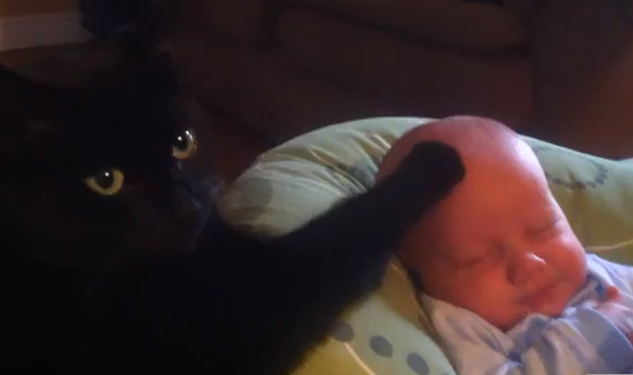Video: Cat Lulls Baby to Sleep