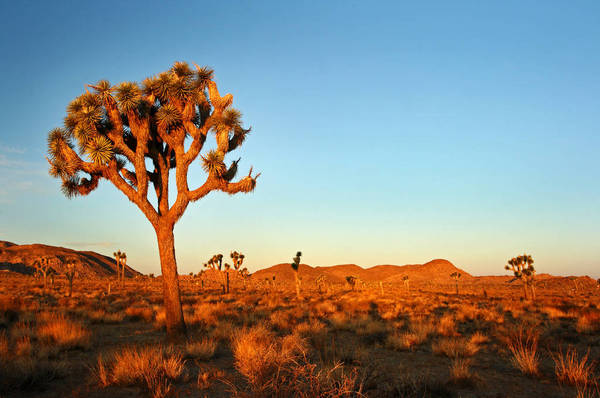 10 Hikes And Sights Outside Las Vegas