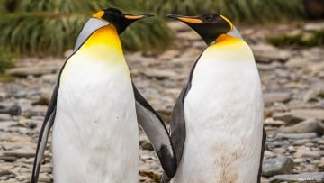 These Gay Penguins Stole an Egg to Start Their Own Family