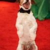 That Dog From 'The Artist' at the 2012 Golden Globe Awards